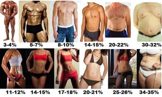 1. body fat comparison